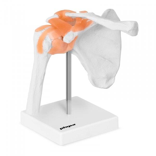 Maquette anatomique de l'épaule humaine PHY-SJ-1